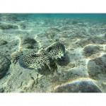 Nature Marine Plage Mer Poisson Reunion