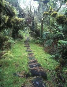 Sentier de la Petite Plaine