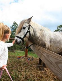 les chevaux du Maido photo 2