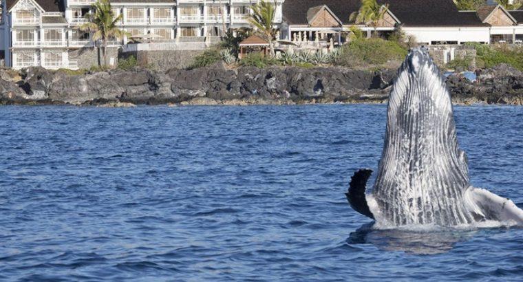 Que faire et voir à La Réunion pour ses vacances de juillet-août 2017