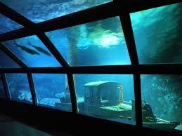 image aquarium st gilles