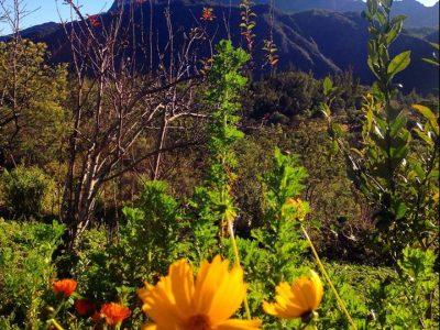 6 randonnées incontournables à La Réunion