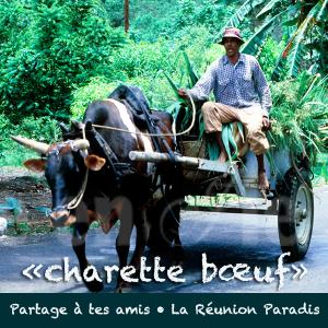 Charettes Boeufs