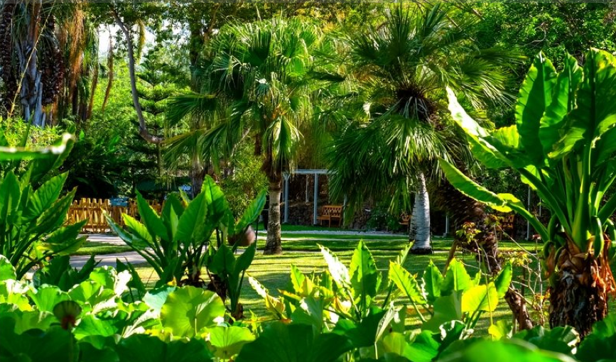 jardin d'eden photo2