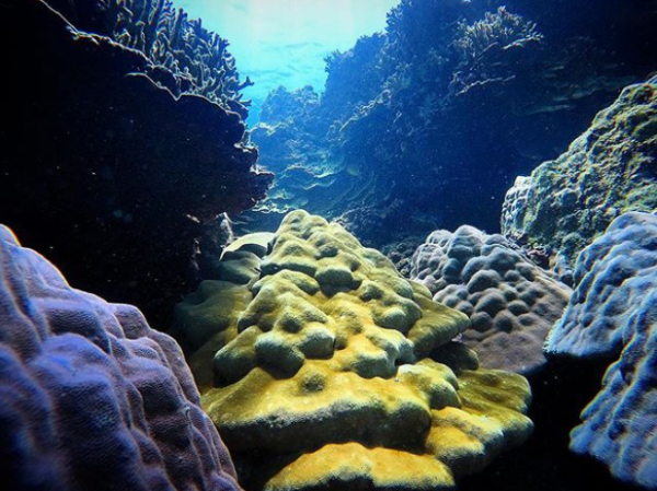 Rift coralien du Cap La Houssaye par insta @evideerf974