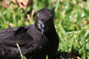 Les espèces endémiques de La Réunion : top 15