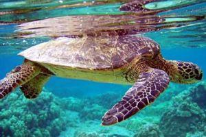 Les meilleurs spots de plongée à La Réunion